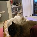 看的出來三貓都在腳椅嗎?