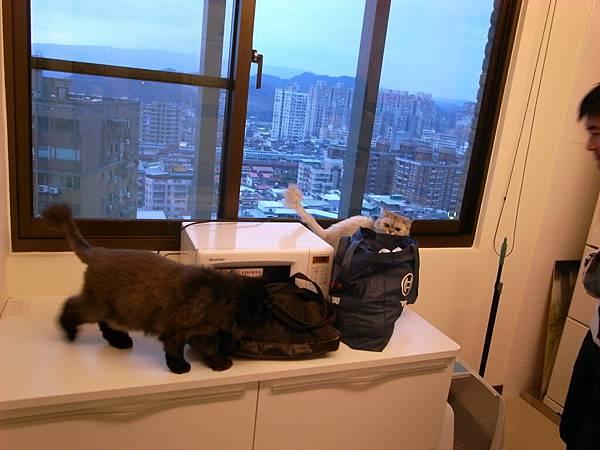 好奇貓兩枚