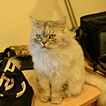 貓咪看到我們回家都過來聞~