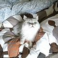 卡妞在棉被堆中躺的可開心~