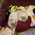 灰皮大概在這個位置躺了兩週,卡妞來搶~