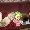 因為想給貓咪蓋被子, 結果我家小毯子一堆