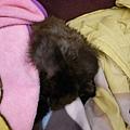 黑皮睡到抱臉~都一團黑看不清楚了~