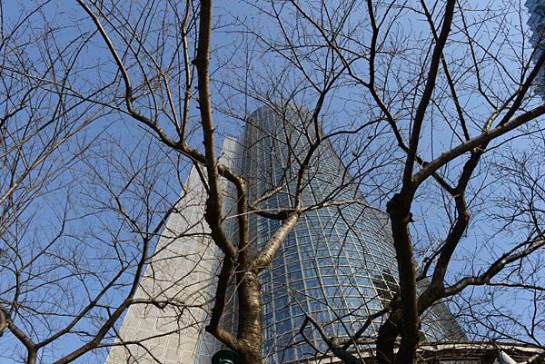 從樹枝中看墨田區役所