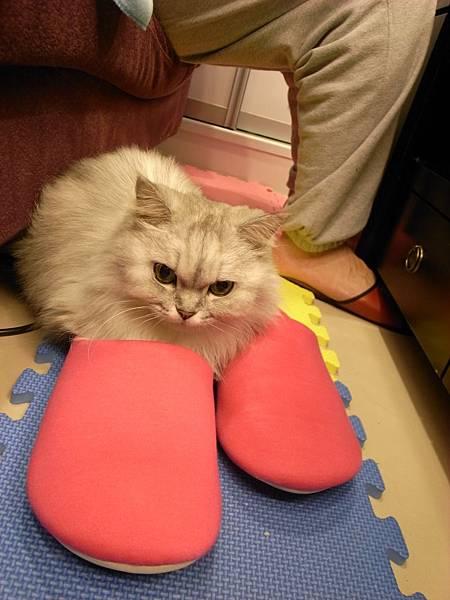 她很愛我的拖鞋,我都要小心不要下沙發踩到她