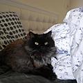 黑皮現在新歡是我們床,而且他會睡在我們枕頭旁邊~
