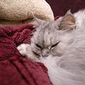 妹很喜歡懶人毯~