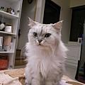 想吃飯的貓咪~