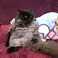黑皮貓沙發