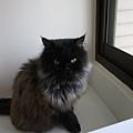 貓咪都會看外面,開窗戶的話他們更愛看~