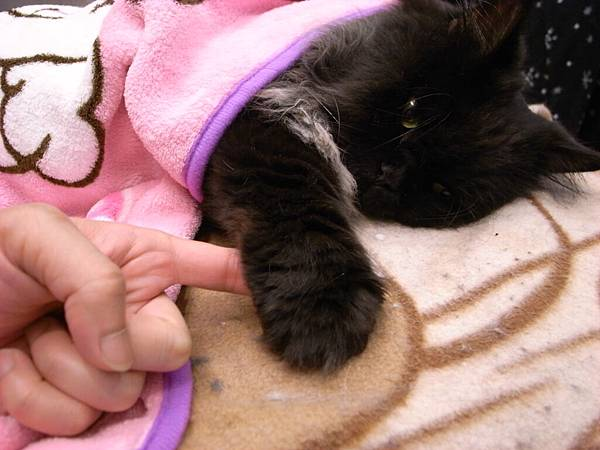 黑皮握手手