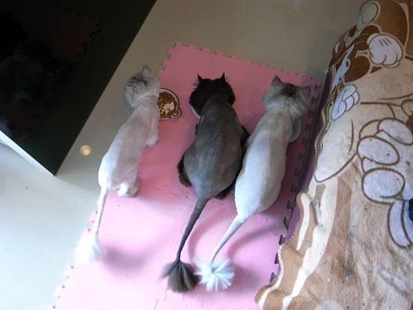 三隻可愛貓~