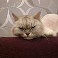 哈哈~三角貓臉