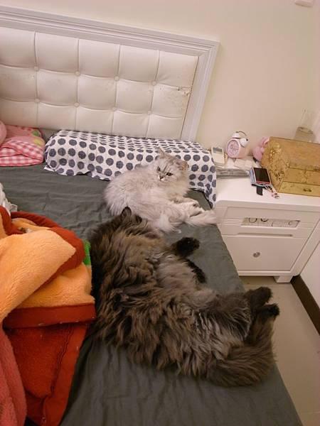 有晚發現他們兩個一起睡耶~