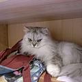 卡妞也是,只是她很愛我的包包就是了~
