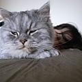 我跟灰皮一起睡~