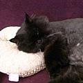 這個墊子黑皮當成枕頭了~