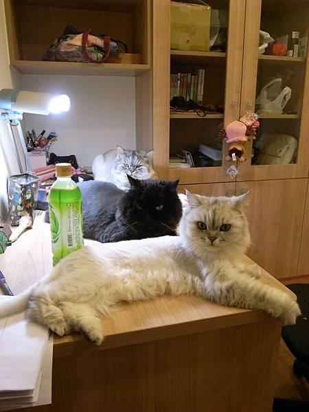 三貓伴讀~好可愛~