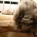 灰皮睡到頭一半是騰空呀~