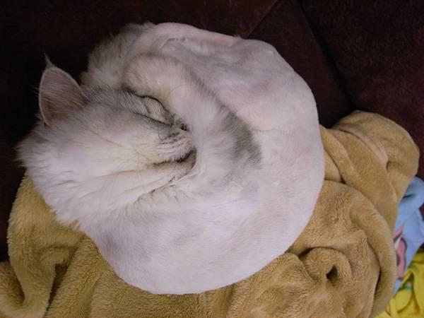 卡妞這樣睡好可愛~抱著臉