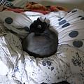 黑皮躺在一團被子中,他很愛~