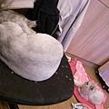 灰皮喜歡電腦椅妹妹喜歡地上那個粉紅墊