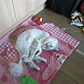 愛粉紅墊~可以跟她玩老鼠~
