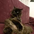 貓沙發,人家我有遮第三點~