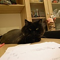 晚上會自己躺書桌,是個愛看書的黑皮