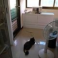 兩隻灰貓在曬太陽~