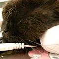 黑皮是非常喜歡老大的滑鼠