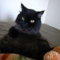 來個正常的貓沙發吧