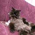 是個很懶散的黑貓