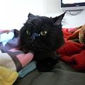 黑皮也愛躺床..好舒服~~