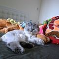 中午他喜歡趴在一堆棉被旁睡覺~