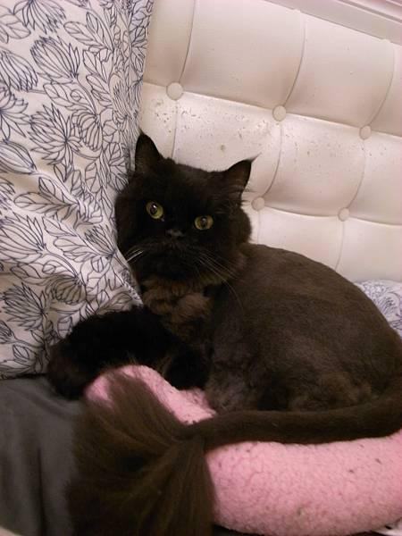 這幾天他又躺粉紅墊,還給我靠枕頭勒~