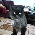 壞貓臉啦~