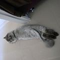可愛的腳,天氣冷了他就不這樣躺了~