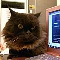 黑皮你在陪我用電腦嘛?