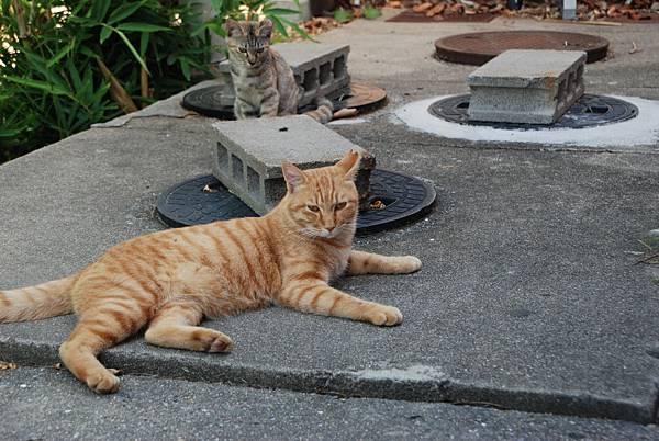 一個伯伯上來餵貓