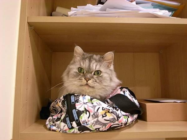 有天他來躺我包包~好可愛~