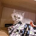 發現我包包可以躺~~