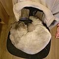 這個是他的椅子~