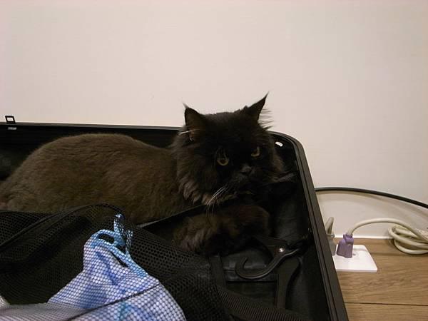 又躺行李箱了~