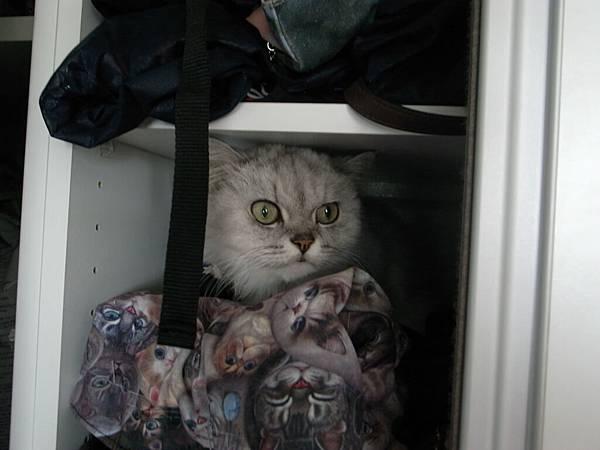 是愛躺櫃子到我回家叫他也不出來