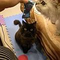 貓咪都太愛了~