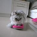 卡妞很愛我的拖鞋