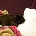 黑皮好像很愛躺枕頭
