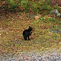 可愛的黑貓