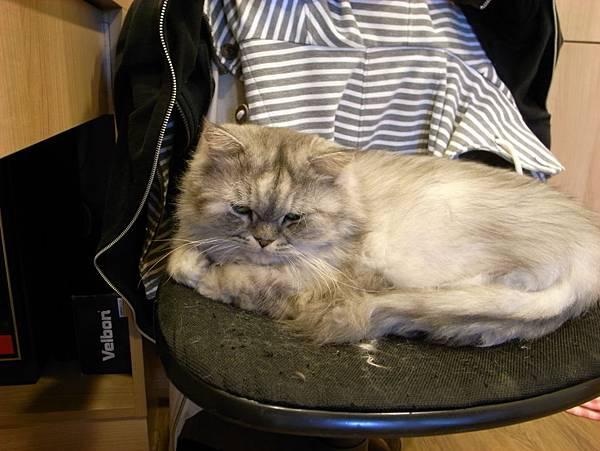 灰皮最愛的椅子~~超愛~~